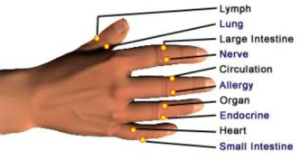 acupressure points dr helena amos office nature medicine clinic